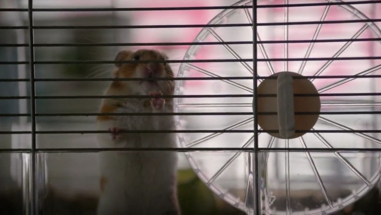 bonus hamster